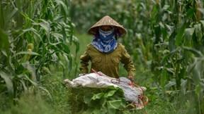 Hai chị em 'bỏ nhà ra đảo', kiếm tiền triệu mỗi ngày nhờ rau sạch