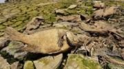 Đồng Nai: Xác cá chết khô rải dài hơn 4km bên bờ sông La Ngà
