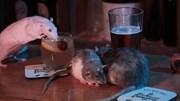Trải nghiệm quán bar nơi bạn uống rượu cùng với những chú chuột vây quanh