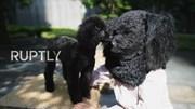 Cháy hàng mặt nạ giúp người nuôi giống hệt thú cưng