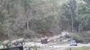Ô tô đỗ ven đường, đàn voi bực tức đập phá, hất văng để lấy lỗi đi