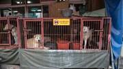 Vấp phải sự phản đối, chợ bán thịt chó lớn nhất Hàn Quốc phải dẹp bỏ