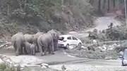 Đàn voi tức giận đẩy nhiều xe ô tô của khách du lịch khỏi lề đường