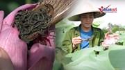 Cử nhân báo chí bỏ phố về quê trồng chè, ướp sen giá chục triệu 1kg