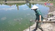 Đà Nẵng: Cá chết trắng ở hồ Trung Nghĩa đã được xử lý