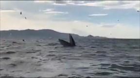 Du khách phấn khích khi thấy cá voi xuất hiện ở biển Kỳ Co, Quy Nhơn