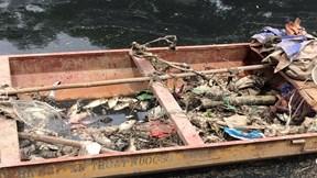Sông Tô Lịch nước đen, cá chết dạt vào bờ sau khi ngừng xả nước hồ Tây