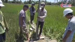 Dân Quảng Nam khốn khổ vì hạn hán, lúa chết cháy hàng loạt