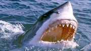 Khoảng khắc cá mập nhảy lên khỏi mặt nước cướp thức ăn