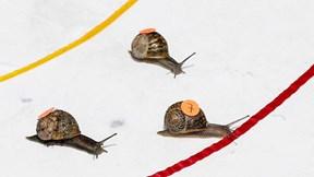 Tìm ra ốc sên chạy nhanh nhất thế giới qua cuộc đua 'Nhà vô địch ốc sên'