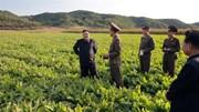 Nhận diện 'vũ khí bay không xác định' Triều Tiên vừa thử
