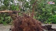 Hải Phòng: Hàng loạt cây xanh bật gốc do bão số 3