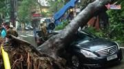 Hà Nội mưa lớn, cây cối đổ hàng loạt do ảnh hưởng của bão số 3