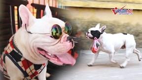 Gặp chú chó 've chai' thích đi chợ cùng chủ 'nổi tiếng' trên mạng