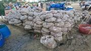 Miền Trung: Nguồn lợi thủy sản ven bờ đứng trước nguy cơ cao bị tận diệt