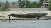 Cá sấu tràn vào đường phố ngập lụt ở Ấn Độ