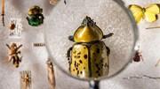 Viễn cảnh thế giới bị diệt vong khi côn trùng biến mất