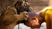 86 con hổ bị chết sau khi được giải cứu
