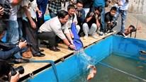 Cá Koi chết trên sông Tô Lịch, lắp thêm camera bảo vệ 24/24