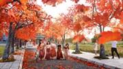 Con đường ở Hà Nội ngập tràn phong lá đỏ, cảnh đẹp như phim Hàn Quốc