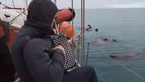 Khoảnh khắc kinh ngạc: Đàn hải mã tập trung lắng nghe tiếng đàn trên biển