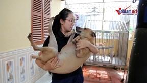 'Đột nhập' trang trại của những chú chó Phú Quốc đắt nhất Việt Nam