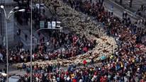 Hàng trăm con cừu xuống phố 'biểu tình', Madrid tắc nghẽn