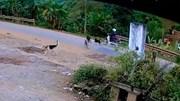 Bị đàn chó thả rông truy đuổi, người đi xe máy ngã 'chổng vó' xuống đường