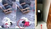 Mèo nhà cứu người thoát chết ngoạn mục