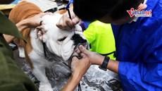 Cún cưng thi tài giành danh hiệu 'Chó đẹp quốc tế' ở Hà Nội