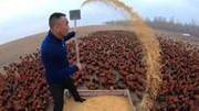 Anh nông dân gây sốt mạng xã hội khi cho gà tập bay, chạy bộ 10km mỗi ngày