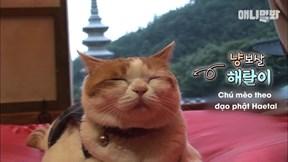 Chú mèo kỳ lạ thích ngồi thiền nghe tụng kinh, ăn chay và không sát sinh