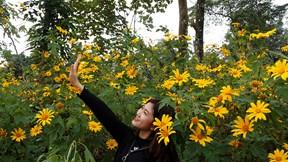 Vườn quốc gia Ba Vì chật cứng khách du lịch mùa hoa dã quỳ