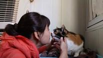 Hành trình 17 năm cứu hàng trăm con mèo: 'Tình thương có thể làm tất cả'