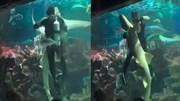 Thợ lặn khiêu vũ cùng cá mập