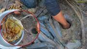 Nam thanh niên bắt được hàng chục con cá trê nhờ mật ong