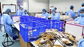 Bên trong 'phân xưởng' điều chế máu lớn nhất Việt Nam
