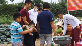 Dưa hấu rớt giá, dân Đà Nẵng chung tay giải cứu cho nông dân