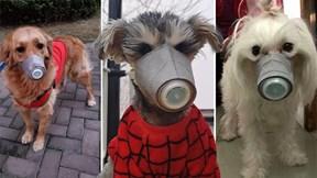 Chiến dịch giải cứu 30.000 thú cưng bị bỏ lại do đại dịch Covid-19 ở Vũ Hán