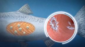 Phát hiện sinh vật biển lạ như ngoài hành tinh, không cần thở vẫn sống