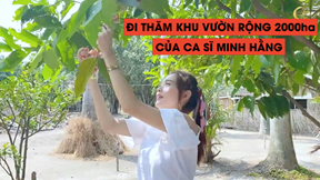 Minh Hằng khoe vườn rộng 20.000m2 bạt ngàn cây cối, hoa quả