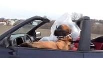 Cách phòng Covid-19 độc đáo của cặp đôi đi xe mui trần