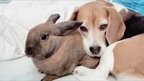 Cặp bạn thân chó và thỏ siêu tình cảm gây sốt mạng xã hội