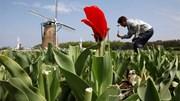 Nhật phá trăm nghìn gốc hoa chống dịch; hổ, sư tử ở Mỹ nhiễm Covid-19