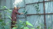 Đình, chùa HN liên tục bị mất cắp tượng phật, bát hương, chuông đồng cổ