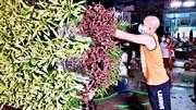 Vừa hết cách ly, người dân Hạ Lôi tất bật chở hoa ra chợ bán