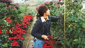 Làng hoa nhà giàu ven Hà Nội: Nông dân đi ôtô ra đồng, biệt thự mọc san sát