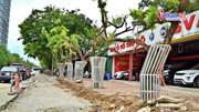 34 cây sưa đỏ ở Hà Nội 'mặc áo giáp', đeo camera chống trộm