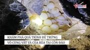 Đến Côn Đảo nhất định phải xem rùa đẻ trứng