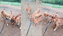 Khoảnh khắc 3 chú chó con cố gắng giải cứu chó mẹ bị chủ phạt